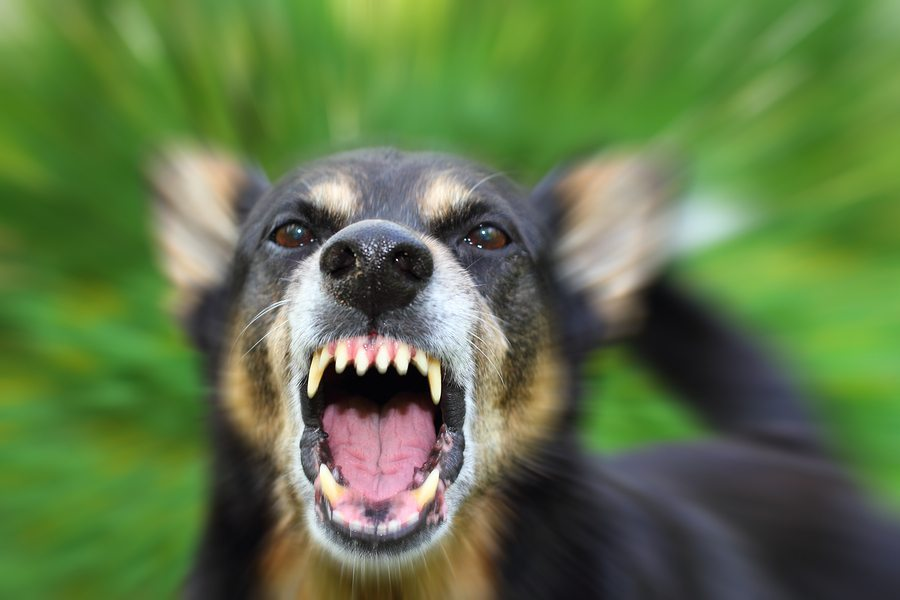 dog bite lawsuit lawyer attorney